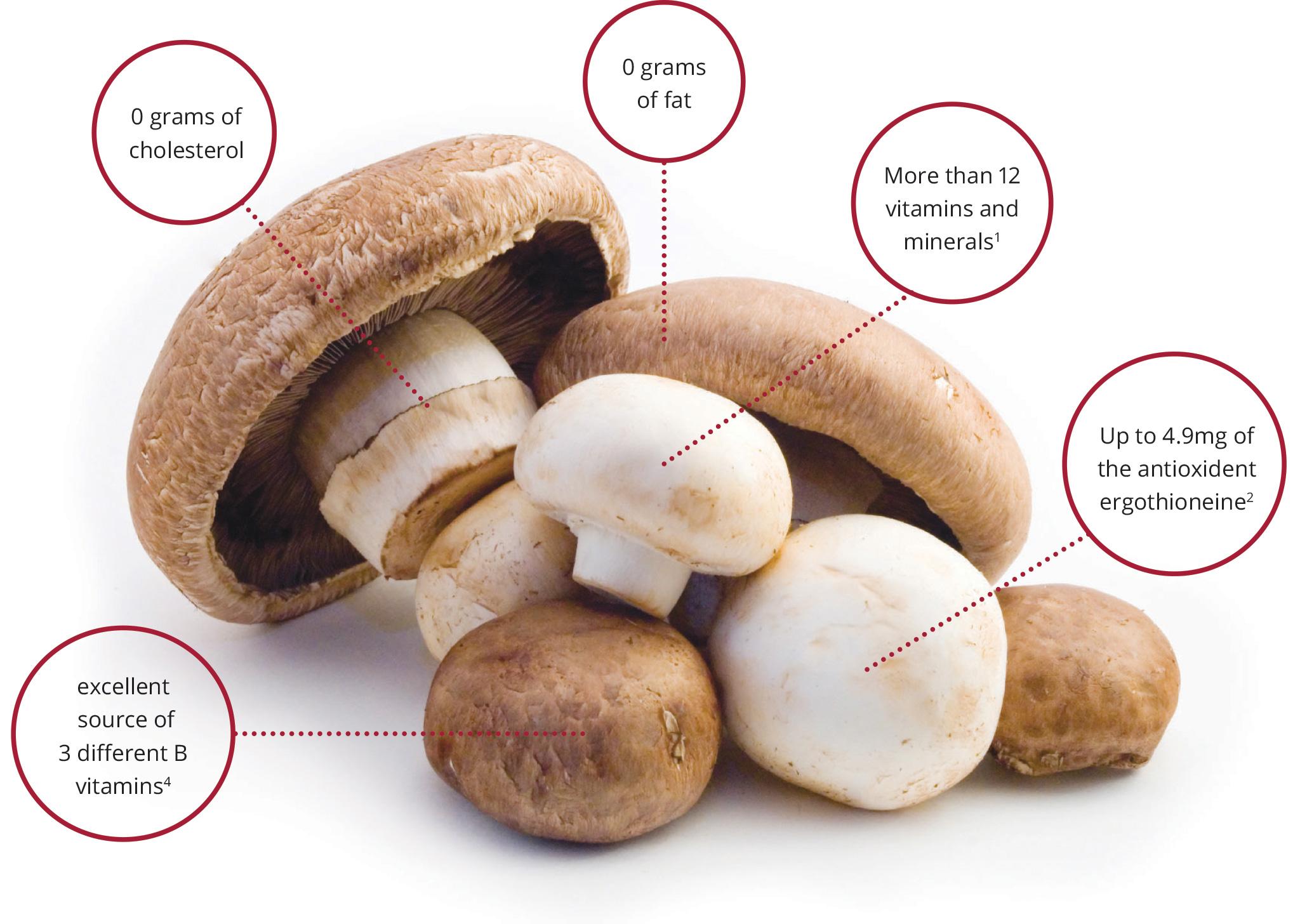 Полезный состав грибов