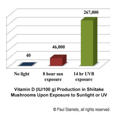 Рост содержания витамина D при облучении грибов