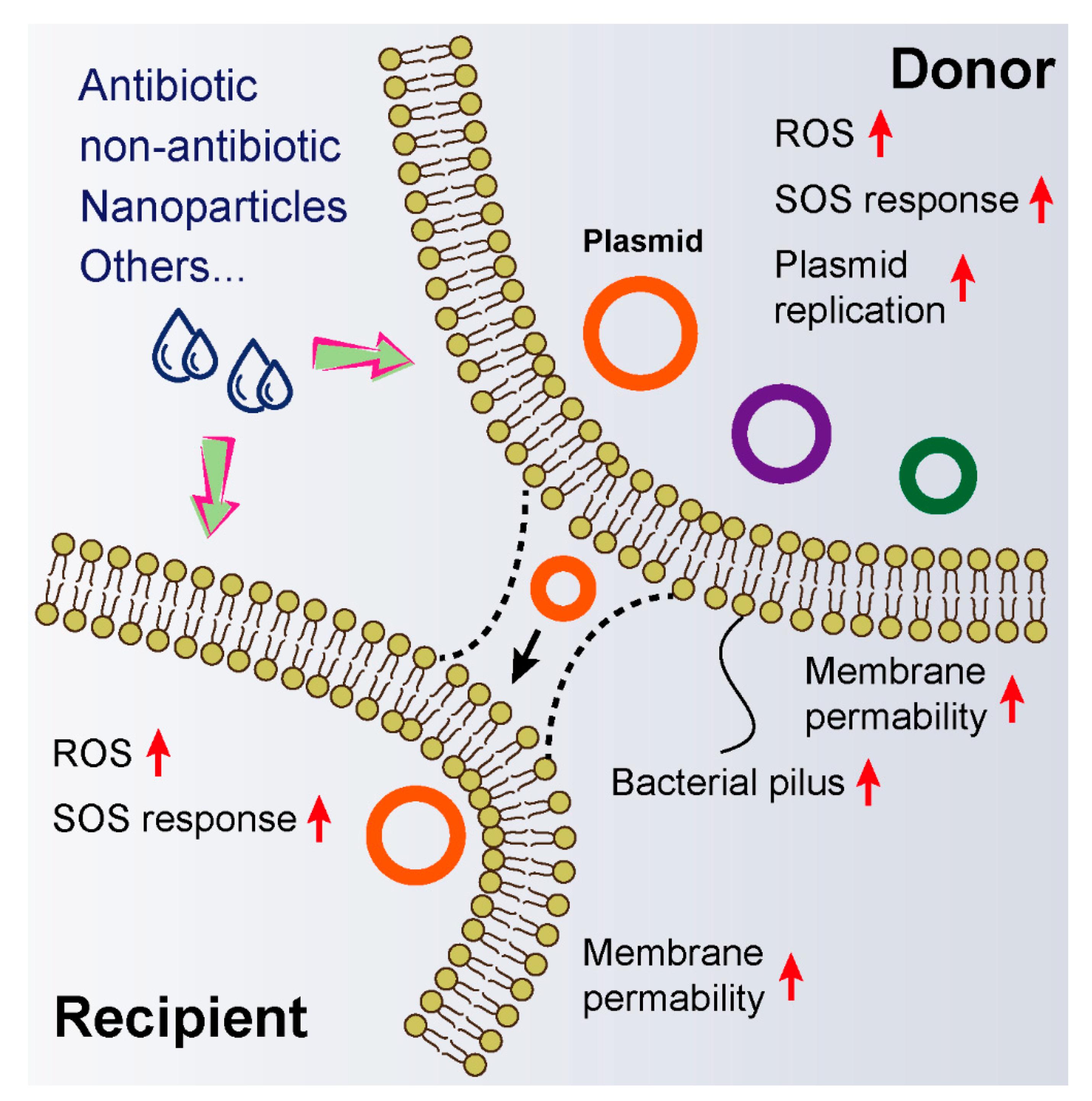 Перенос генов устойчивых к антибиотикам