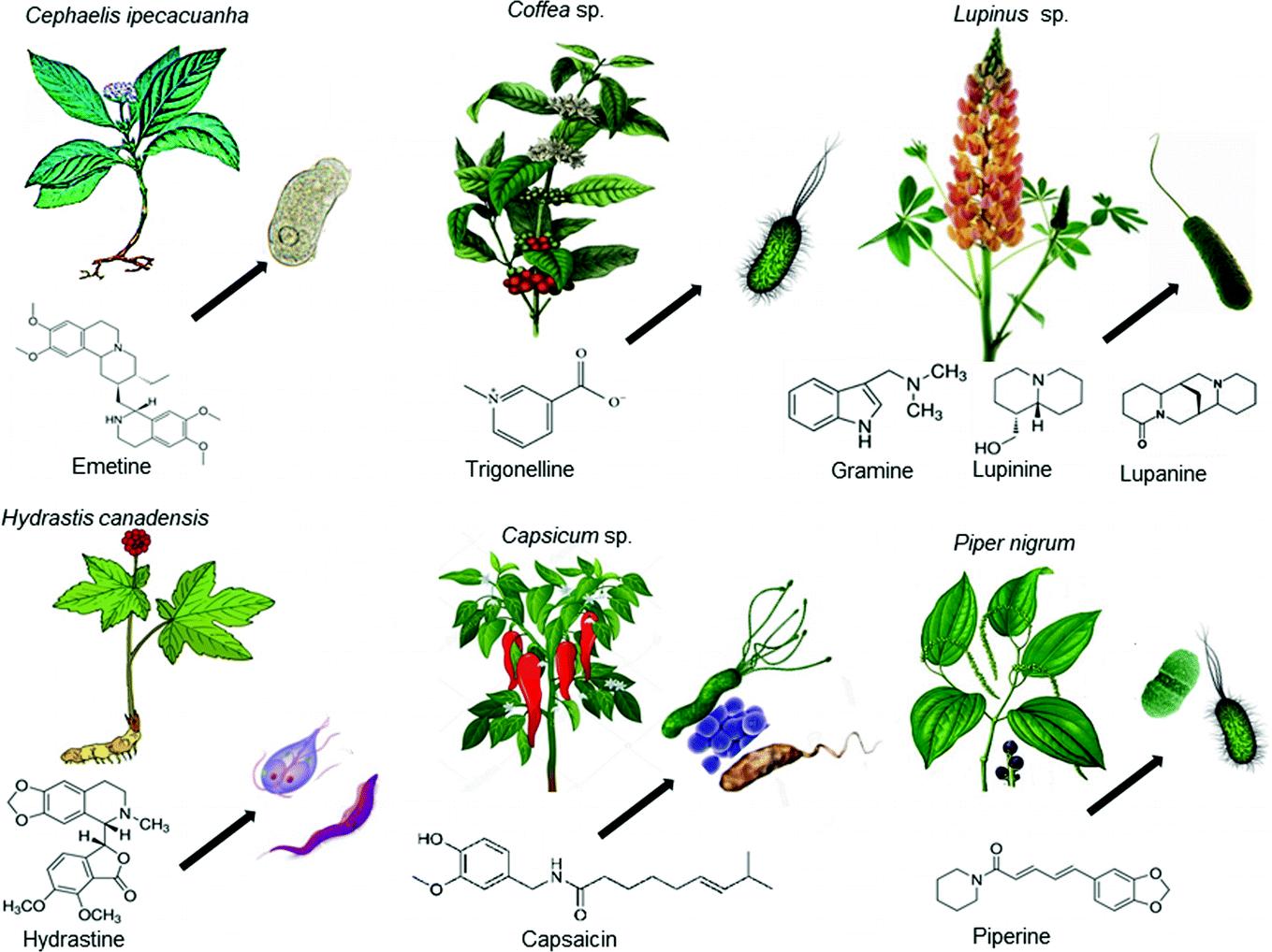 Алкалоиды защищают растения