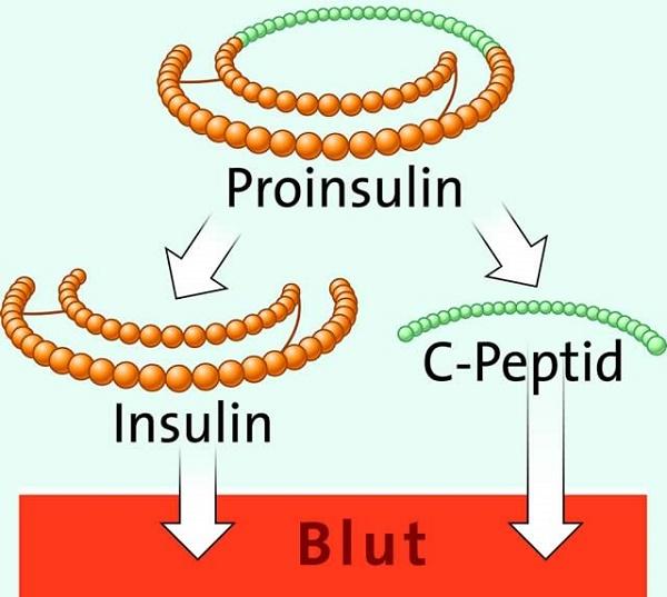 С-пептид и инсулин