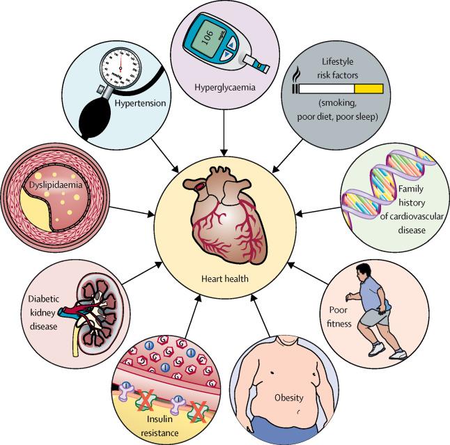 Риски сердечно-сосудистых заболеваний