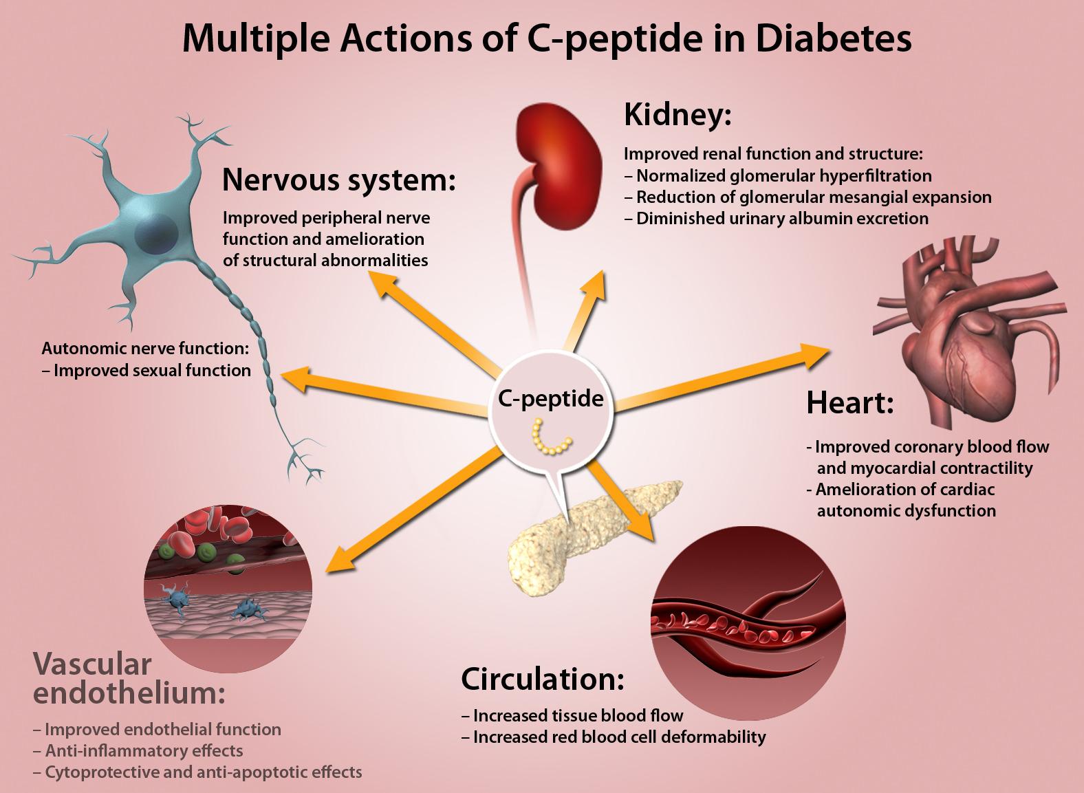 С-пептид при диабете оказывает некоторые защитные действия