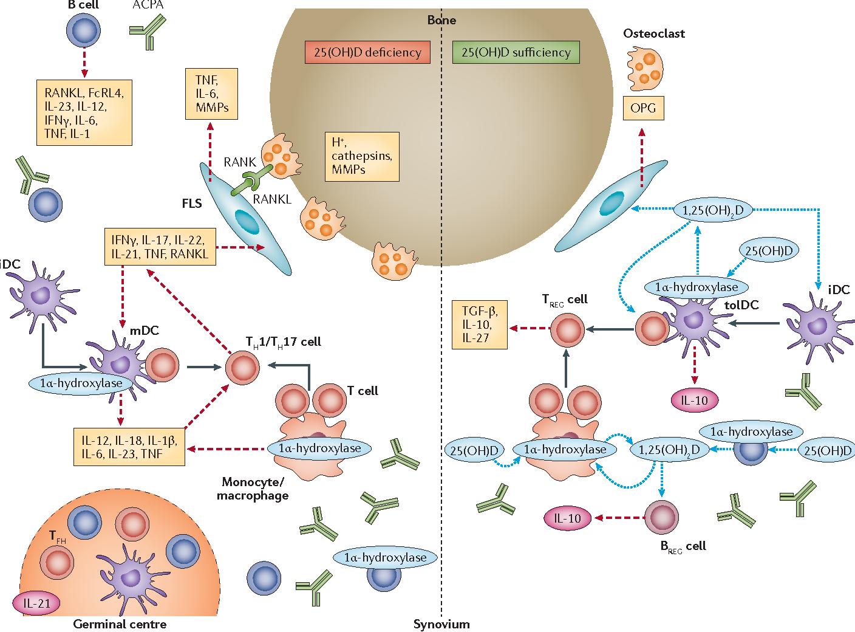 Витамин D при ревматоидном артрите