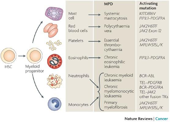 Рак формируется, опираясь на мутации