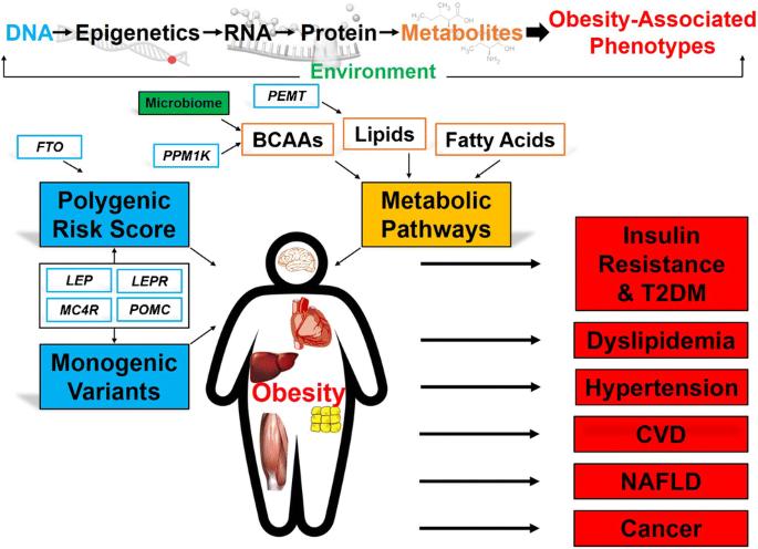 Ген FTO и геномика ожирения