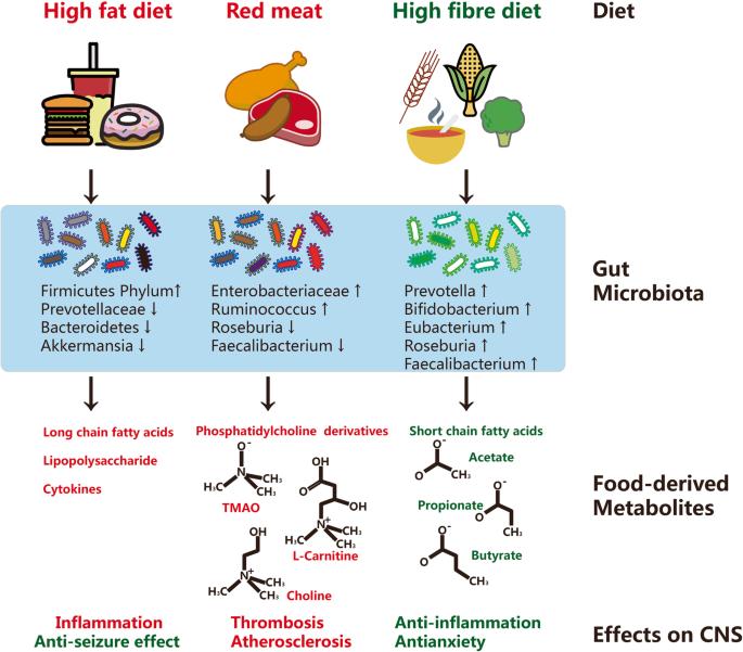 Влияние диет на заболевания