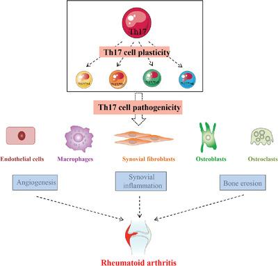 Ревматоидный артрит ухудшается клетками Th17