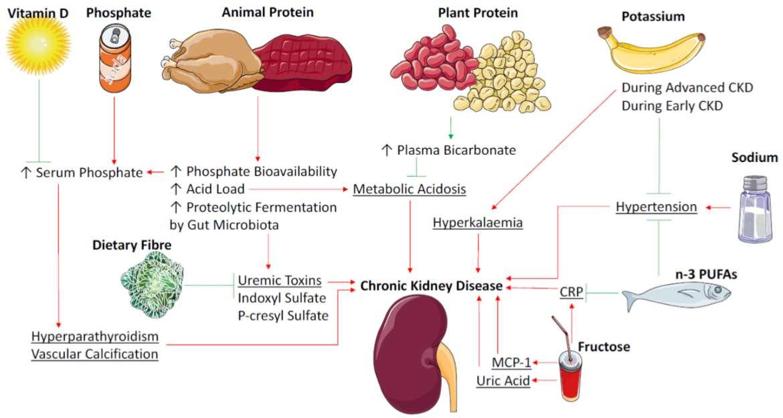 Хроническая болезнь почек и различные продукты питания
