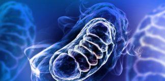 СОД2 как антиоксидантная защита