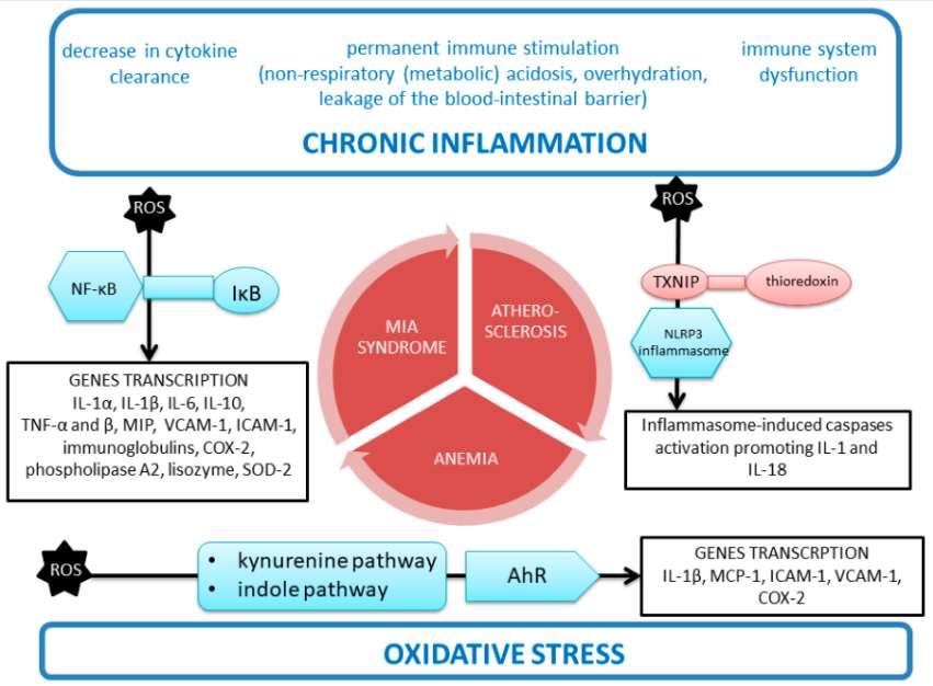 СОД2 при хронической болезни почек