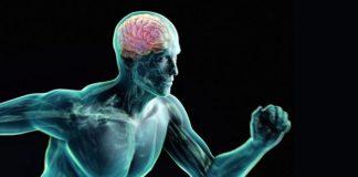 BDNF увеличивается при физической активности