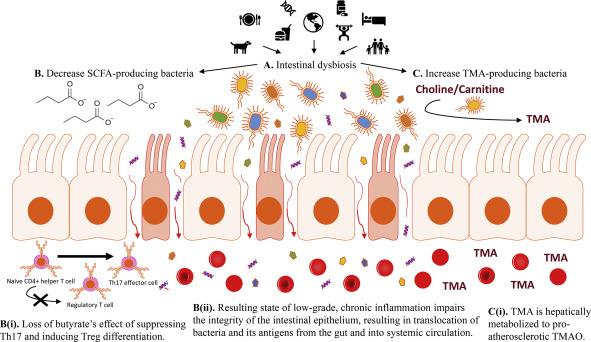 Нарушение микрофлоры при псориатическом артрите