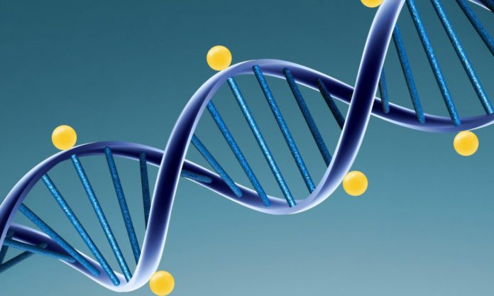 Метилирование и ген MTHFR