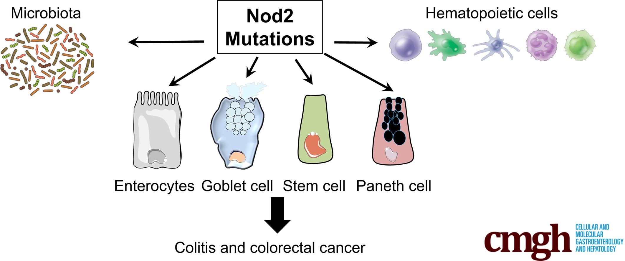 Мутации в гене NOD2