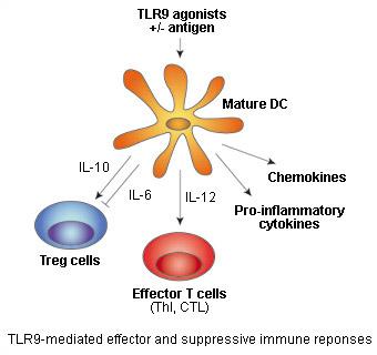 Рецептор TLR9