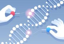 Мутации генов BRAC1 и BRAC2