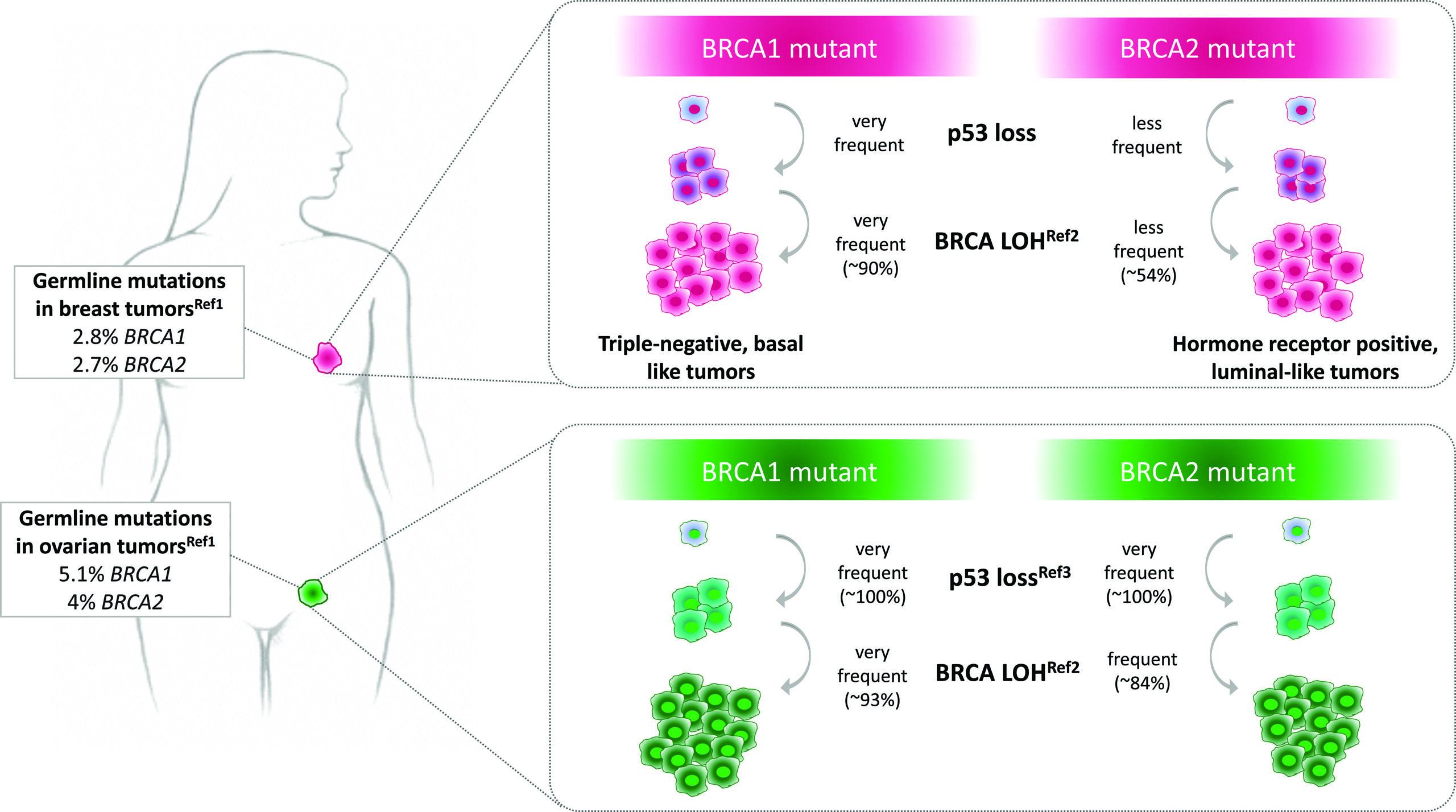 Мутации в генах BRCA1 и BRCA2