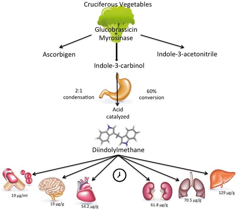 BRCA1 и BRCA2 индол-3-карбинол